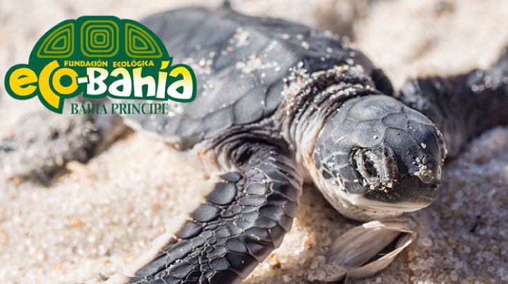 Sea Turtle |Bahia Principe Privilege Club
