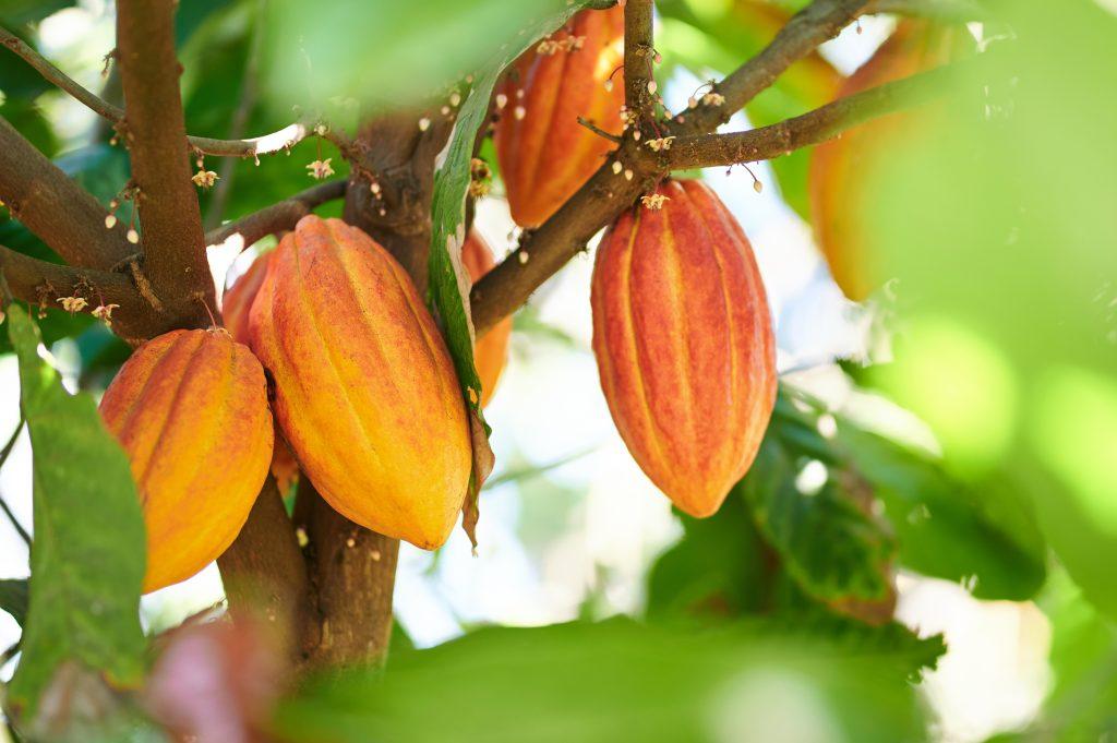 International Chocolate Day-Día Internacional del Chocolate-Journée internationale du chocolat